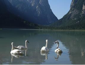Associazione Turistica Dobbiaco - Siamo a vostra disposizione